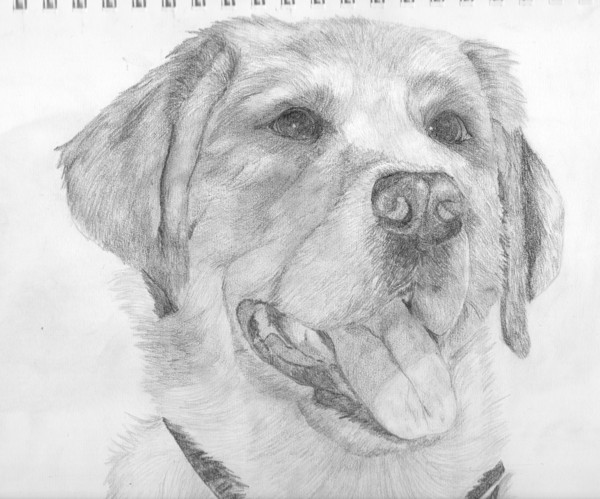 Dessin de s b page 2 - Dessin d un chien ...